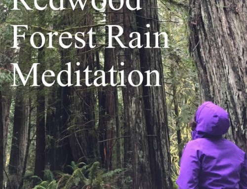 Redwood Forest Rain