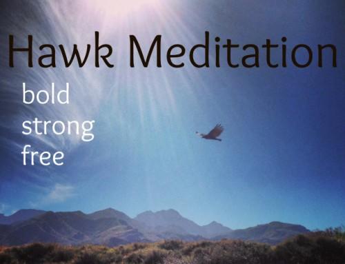 Hawk Meditation