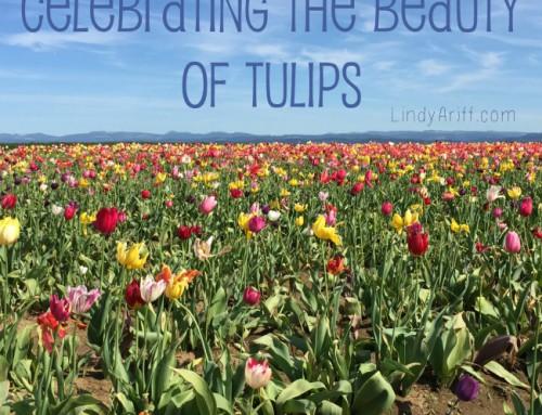 Celebrating Tulips