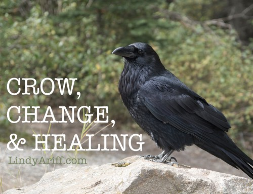 Crow, Change, and Healing